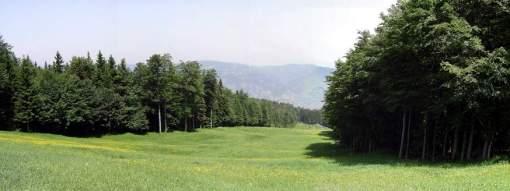 vedno zeleno Pohorje
